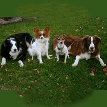 Goldner Dogs
